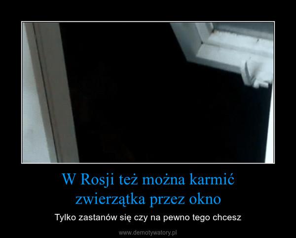W Rosji też można karmićzwierzątka przez okno – Tylko zastanów się czy na pewno tego chcesz