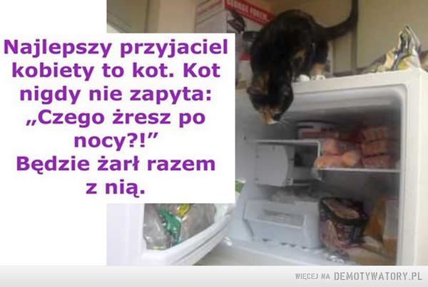 """Najlepszy przyjaciel kobiety... –  Najlepszy przyjaciel kobiety to kot. Kot nigdy nie zapyta """"czego żresz po nocy?!"""" Będzie żarł razem z nią."""