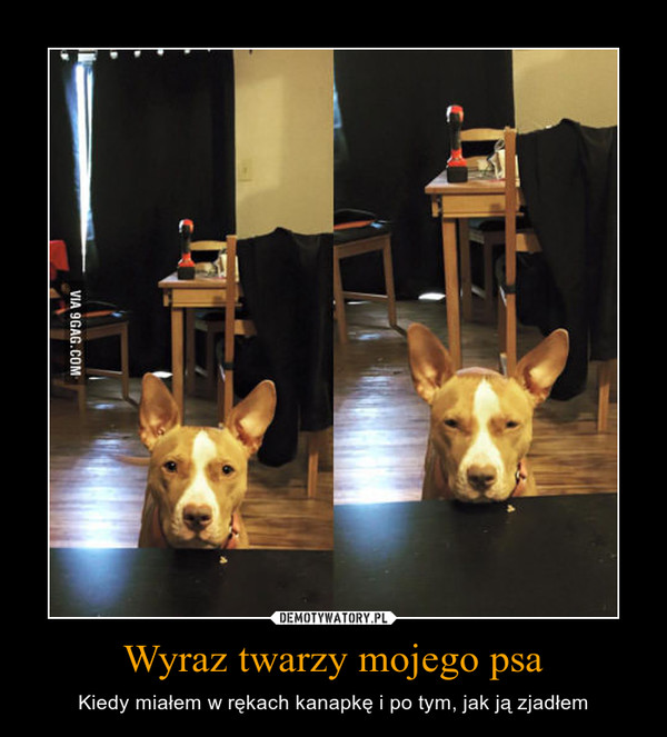Wyraz twarzy mojego psa – Kiedy miałem w rękach kanapkę i po tym, jak ją zjadłem