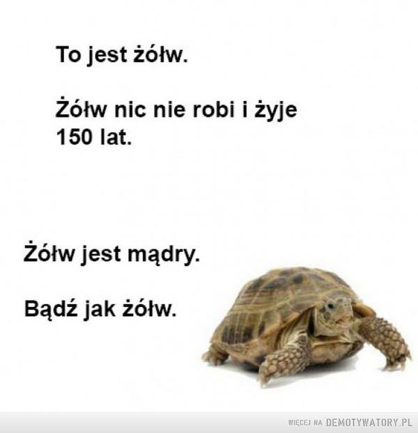Bierzmy przykład z żółwia –