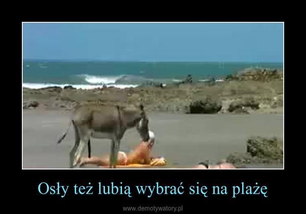 Osły też lubią wybrać się na plażę –
