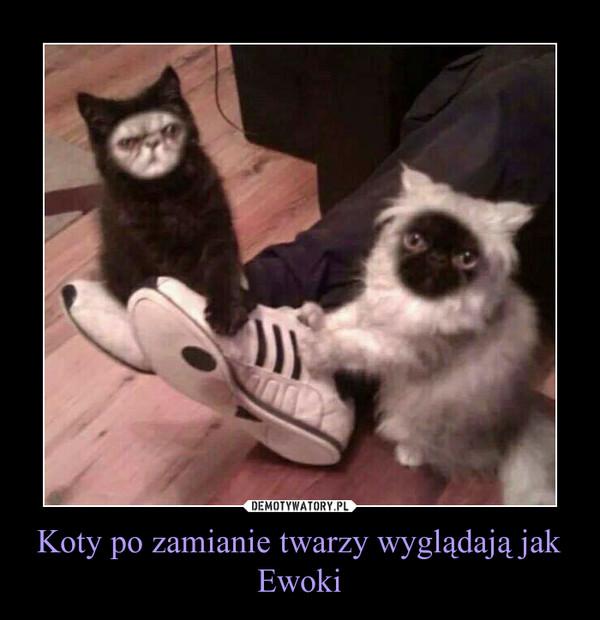 Koty po zamianie twarzy wyglądają jak Ewoki –