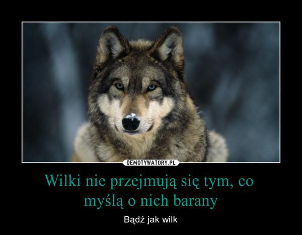 Wilki nie przejmują się tym, co myślą o nich barany – Bądź jak wilk