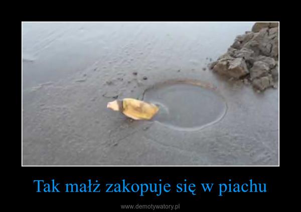 Tak małż zakopuje się w piachu –