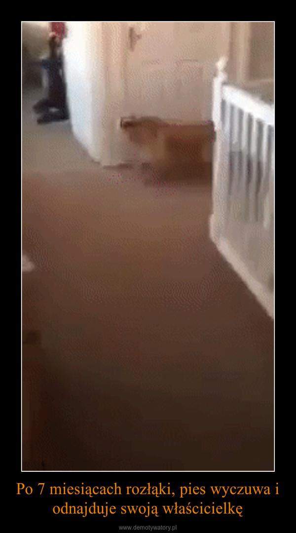 Po 7 miesiącach rozłąki, pies wyczuwa i odnajduje swoją właścicielkę –