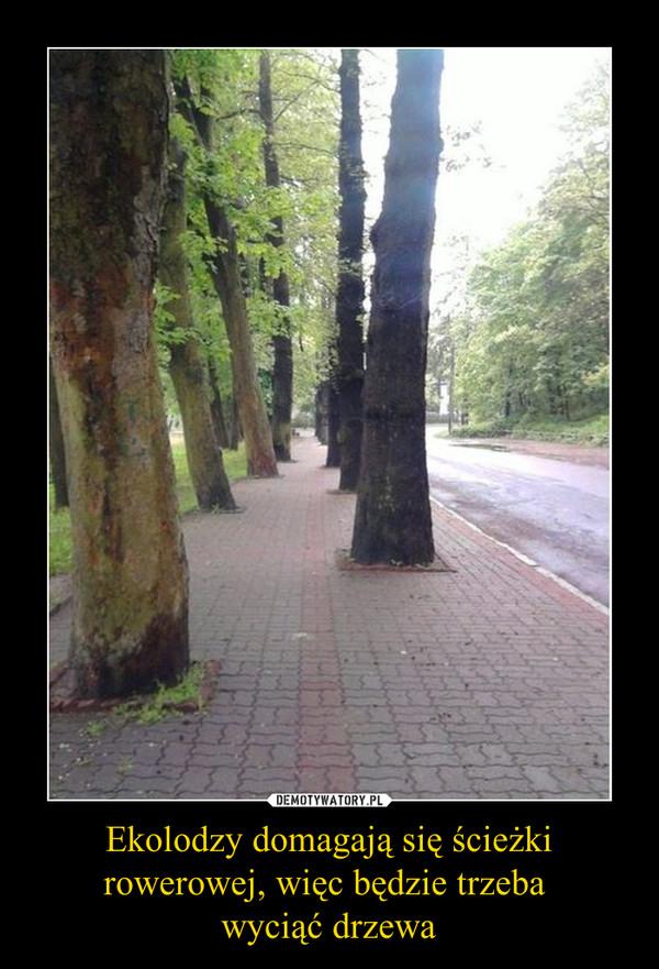 Ekolodzy domagają się ścieżki rowerowej, więc będzie trzeba wyciąć drzewa –