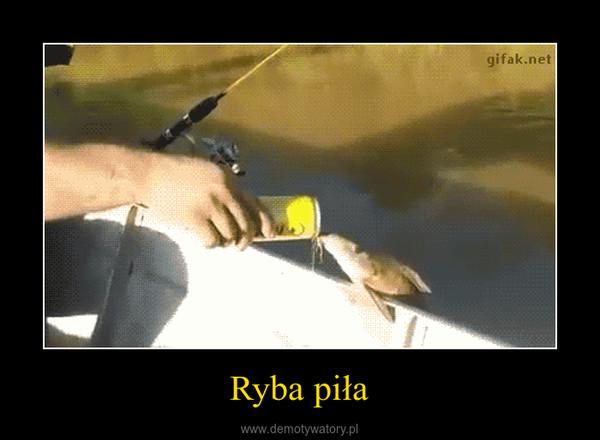 Ryba piła –
