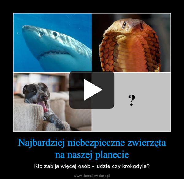 Najbardziej niebezpieczne zwierzętana naszej planecie – Kto zabija więcej osób - ludzie czy krokodyle?