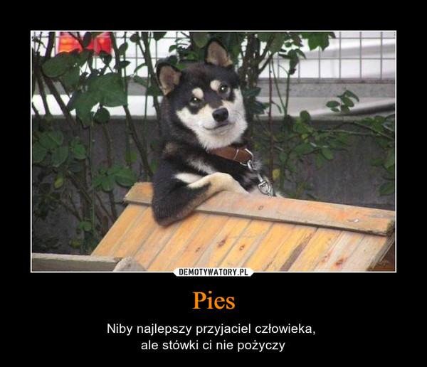 Pies – Niby najlepszy przyjaciel człowieka, ale stówki ci nie pożyczy