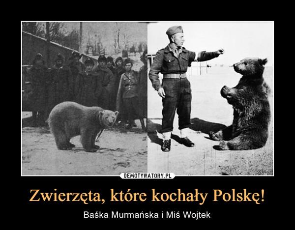 Zwierzęta, które kochały Polskę! – Baśka Murmańska i Miś Wojtek