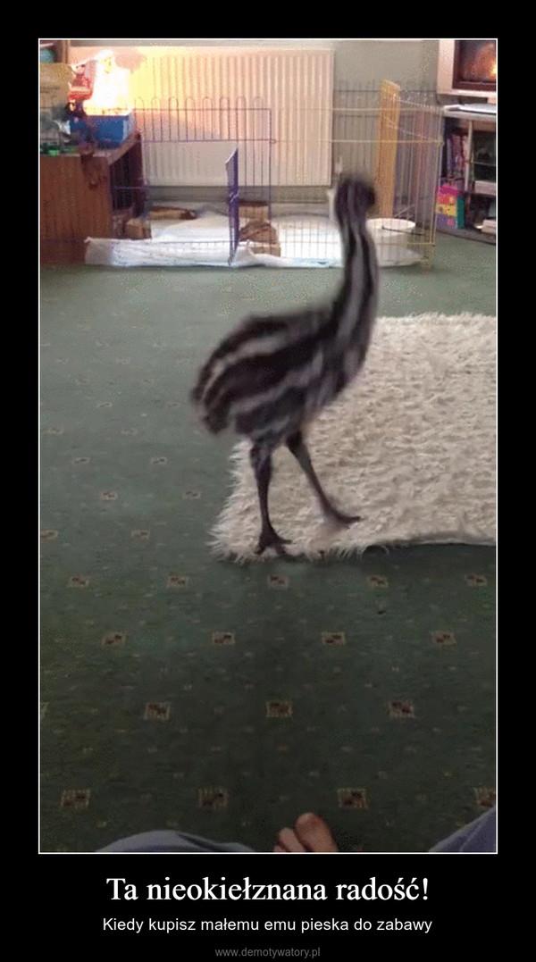 Ta nieokiełznana radość! – Kiedy kupisz małemu emu pieska do zabawy