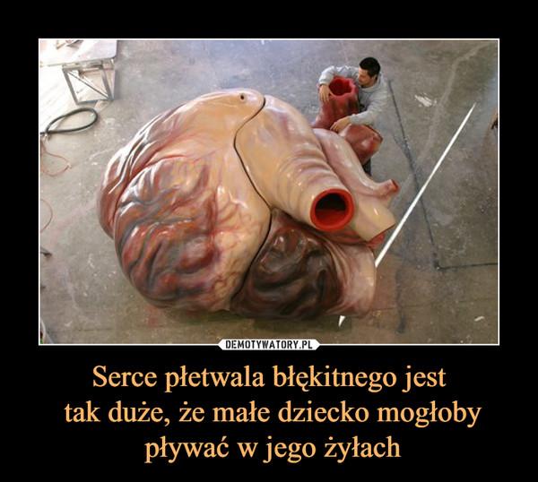 Serce płetwala błękitnego jest tak duże, że małe dziecko mogłoby pływać w jego żyłach –