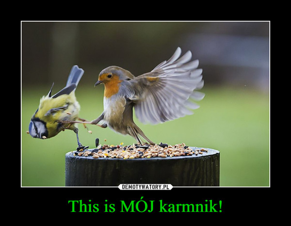 This is MÓJ karmnik! –