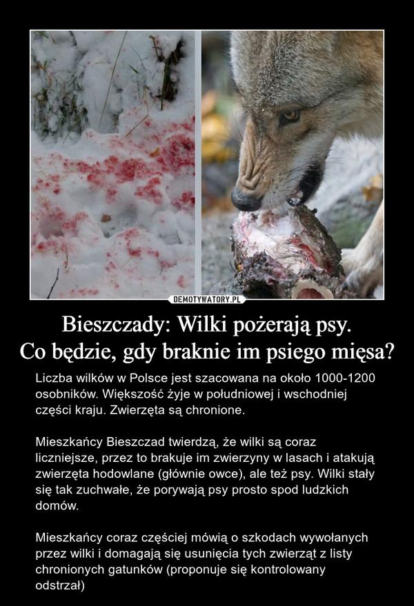 Bieszczady: Wilki pożerają psy.Co będzie, gdy braknie im psiego mięsa? – Liczba wilków w Polsce jest szacowana na około 1000-1200 osobników. Większość żyje w południowej i wschodniej części kraju. Zwierzęta są chronione.Mieszkańcy Bieszczad twierdzą, że wilki są coraz liczniejsze, przez to brakuje im zwierzyny w lasach i atakują zwierzęta hodowlane (głównie owce), ale też psy. Wilki stały się tak zuchwałe, że porywają psy prosto spod ludzkich domów.Mieszkańcy coraz częściej mówią o szkodach wywołanych przez wilki i domagają się usunięcia tych zwierząt z listy chronionych gatunków (proponuje się kontrolowany odstrzał)