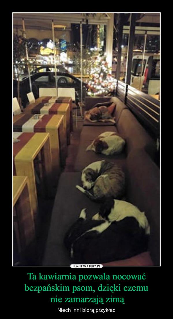 Ta kawiarnia pozwala nocować bezpańskim psom, dzięki czemu nie zamarzają zimą – Niech inni biorą przykład
