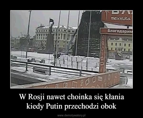 W Rosji nawet choinka się kłaniakiedy Putin przechodzi obok –