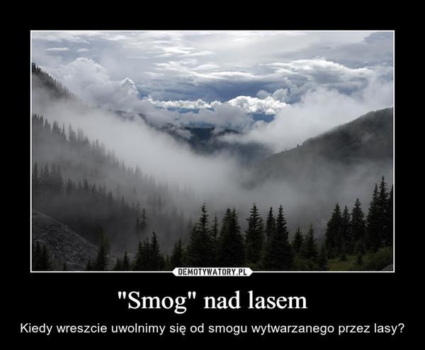 """""""Smog"""" nad lasem – Kiedy wreszcie uwolnimy się od smogu wytwarzanego przez lasy?"""