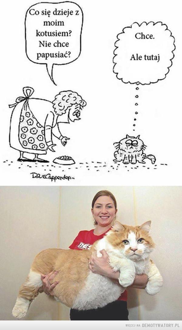 Skutki braku ruchu –  Co się dzieje z moim kotusiem?Nie chce papusiać?Chcę. Ale tutaj