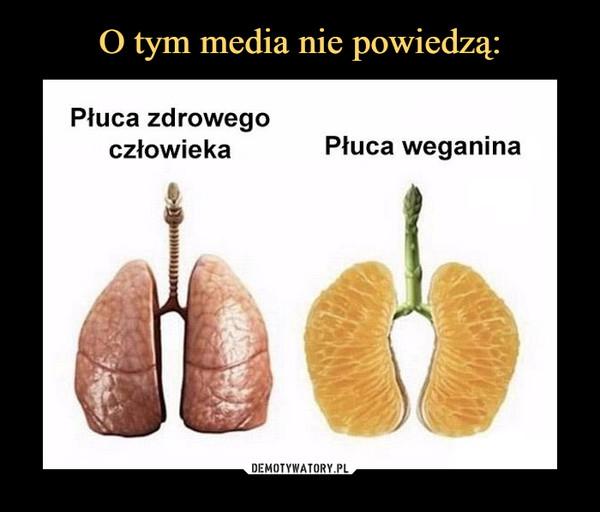 –  płuca zdrowego człowieka płuca wegana