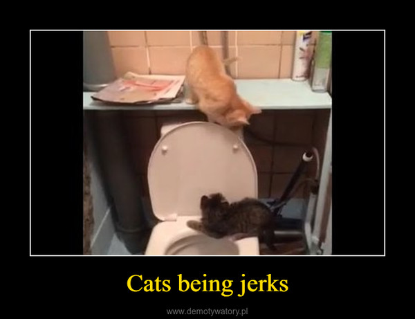 Сats being jerks –