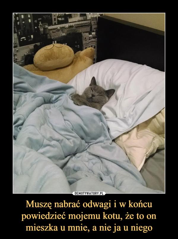 Muszę nabrać odwagi i w końcu powiedzieć mojemu kotu, że to on mieszka u mnie, a nie ja u niego –
