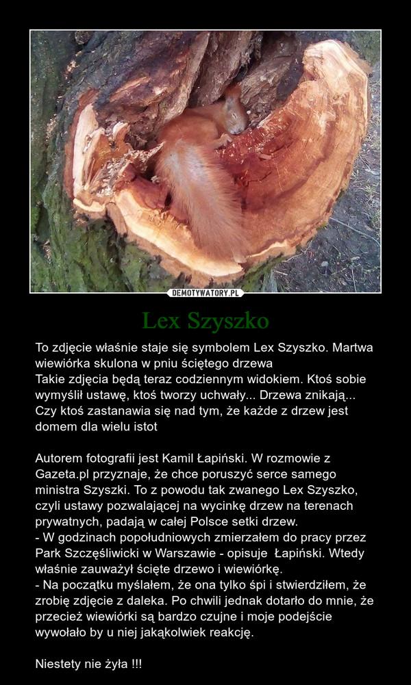 Lex Szyszko – To zdjęcie właśnie staje się symbolem Lex Szyszko. Martwa wiewiórka skulona w pniu ściętego drzewaTakie zdjęcia będą teraz codziennym widokiem. Ktoś sobie wymyślił ustawę, ktoś tworzy uchwały... Drzewa znikają... Czy ktoś zastanawia się nad tym, że każde z drzew jest domem dla wielu istotAutorem fotografii jest Kamil Łapiński. W rozmowie z Gazeta.pl przyznaje, że chce poruszyć serce samego ministra Szyszki. To z powodu tak zwanego Lex Szyszko, czyli ustawy pozwalającej na wycinkę drzew na terenach prywatnych, padają w całej Polsce setki drzew.- W godzinach popołudniowych zmierzałem do pracy przez Park Szczęśliwicki w Warszawie - opisuje  Łapiński. Wtedy właśnie zauważył ścięte drzewo i wiewiórkę.- Na początku myślałem, że ona tylko śpi i stwierdziłem, że zrobię zdjęcie z daleka. Po chwili jednak dotarło do mnie, że przecież wiewiórki są bardzo czujne i moje podejście wywołało by u niej jakąkolwiek reakcję. Niestety nie żyła !!!