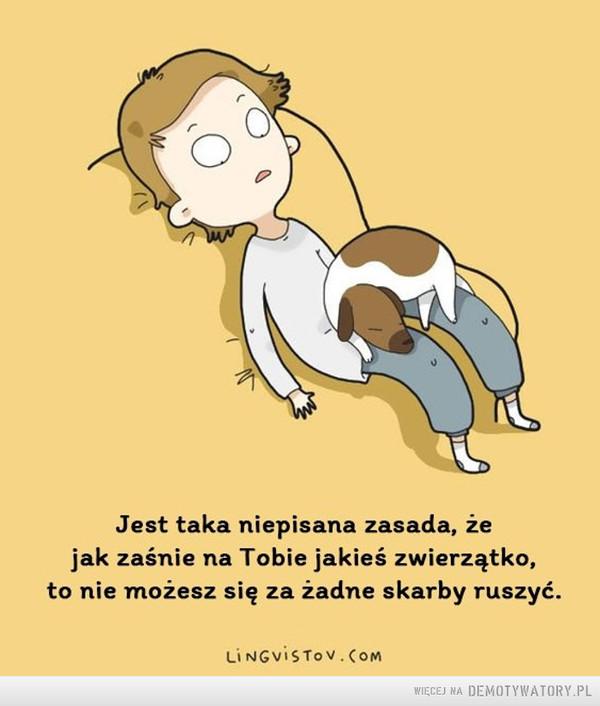 Zasada –  Jest taka niepisana zasada, żejak zaśnie na Tobie jakieś zwierzątko,to nie możesz się za żadne skarby ruszyć.