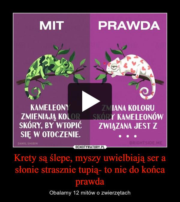Krety są ślepe, myszy uwielbiają ser a słonie strasznie tupią- to nie do końca prawda – Obalamy 12 mitów o zwierzętach