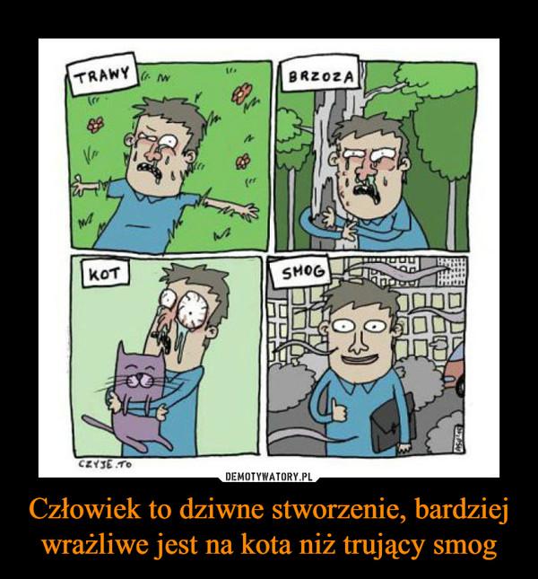 Człowiek to dziwne stworzenie, bardziej wrażliwe jest na kota niż trujący smog –