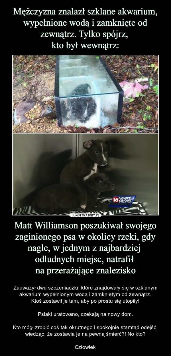 Matt Williamson poszukiwał swojego zaginionego psa w okolicy rzeki, gdy nagle, w jednym z najbardziej odludnych miejsc, natrafił na przerażające znalezisko – Zauważył dwa szczeniaczki, które znajdowały się w szklanym akwarium wypełnionym wodą i zamkniętym od zewnątrz.Ktoś zostawił je tam, aby po prostu się utopiły!Psiaki uratowano, czekają na nowy dom.Kto mógł zrobić coś tak okrutnego i spokojnie stamtąd odejść, wiedząc, że zostawia je na pewną śmierć?! No kto?Człowiek