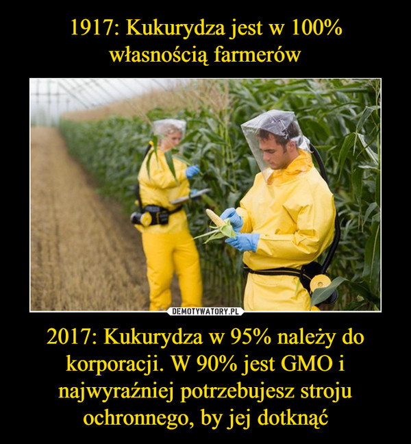 2017: Kukurydza w 95% należy do korporacji. W 90% jest GMO i najwyraźniej potrzebujesz stroju ochronnego, by jej dotknąć –