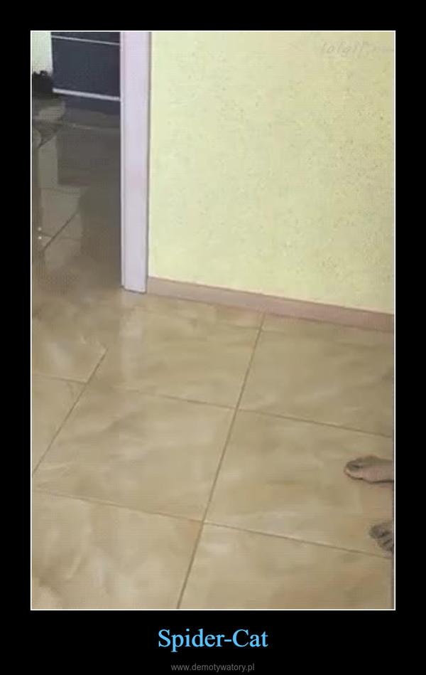 Spider-Cat –