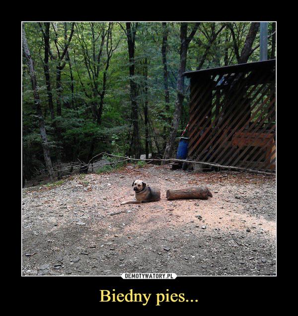Biedny pies... –