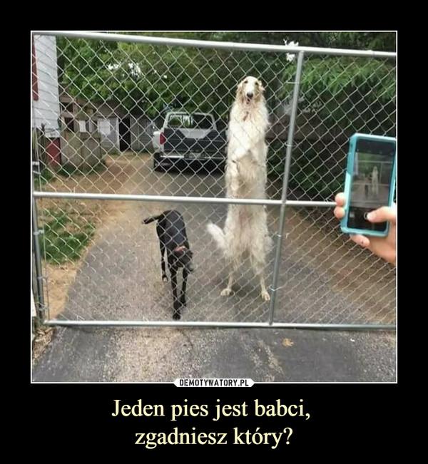 Jeden pies jest babci, zgadniesz który? –