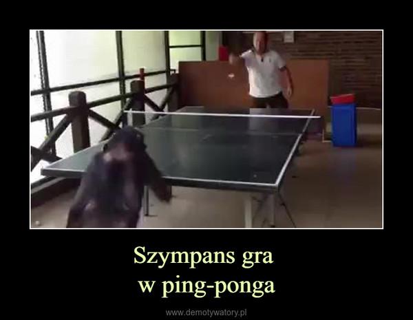 Szympans gra w ping-ponga –