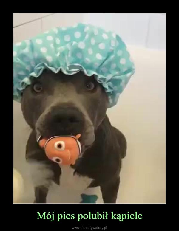 Mój pies polubił kąpiele –