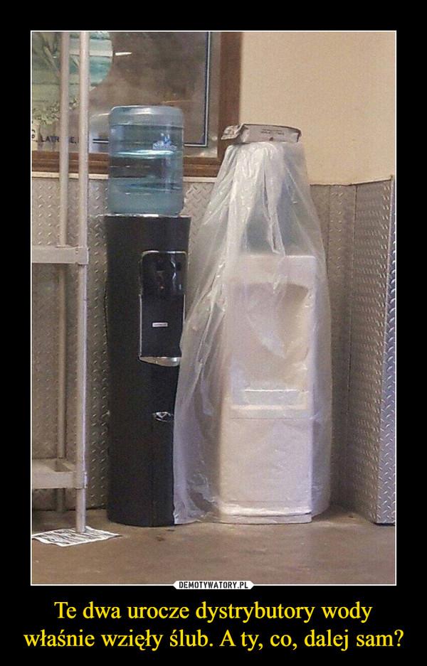 Te dwa urocze dystrybutory wody właśnie wzięły ślub. A ty, co, dalej sam? –