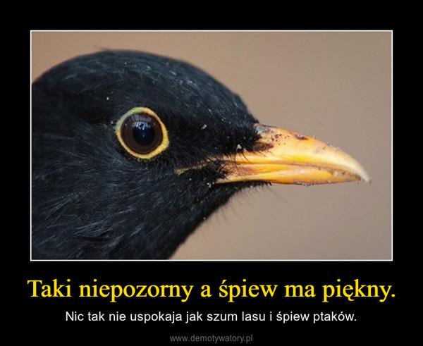 Taki niepozorny a śpiew ma piękny. – Nic tak nie uspokaja jak szum lasu i śpiew ptaków.