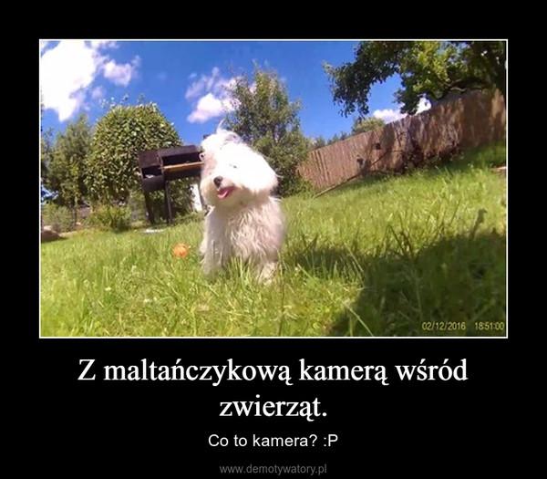 Z maltańczykową kamerą wśród zwierząt. – Co to kamera? :P