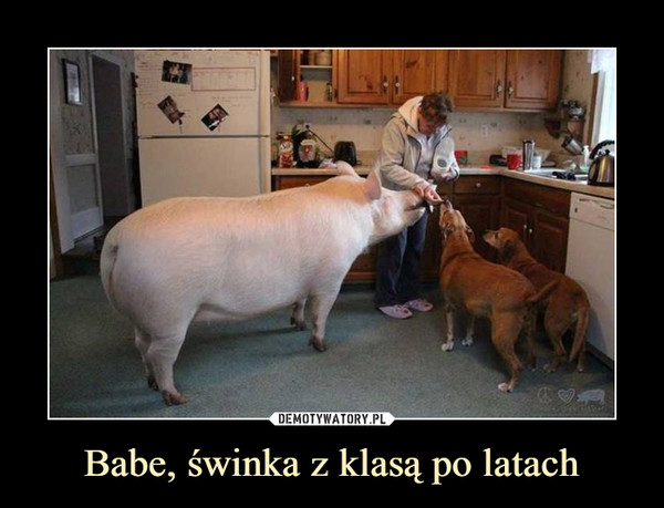 Babe, świnka z klasą po latach –