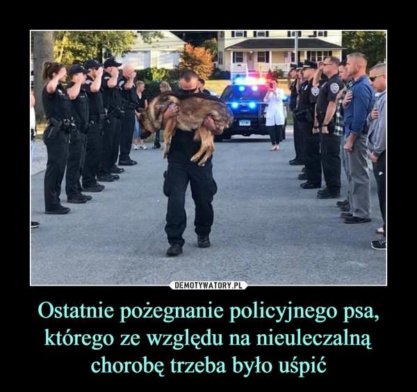 Ostatnie pożegnanie policyjnego psa, którego ze względu na nieuleczalną chorobę trzeba było uśpić –