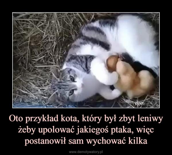 Oto przykład kota, który był zbyt leniwy żeby upolować jakiegoś ptaka, więc postanowił sam wychować kilka –