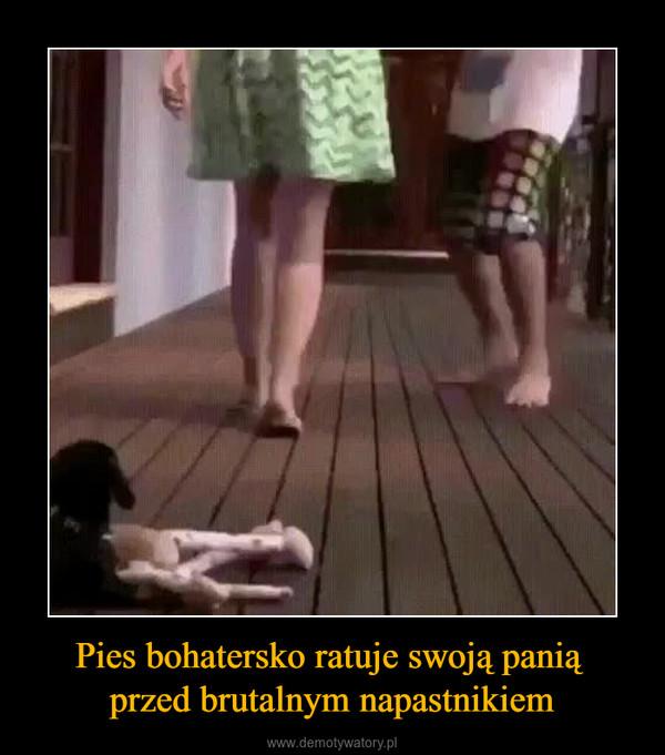 Pies bohatersko ratuje swoją panią przed brutalnym napastnikiem –