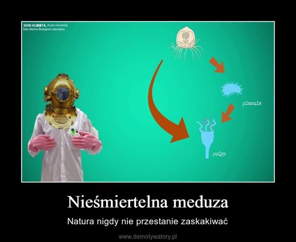 Nieśmiertelna meduza – Natura nigdy nie przestanie zaskakiwać