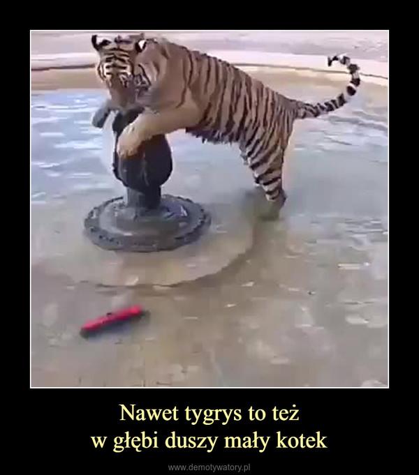 Nawet tygrys to teżw głębi duszy mały kotek –