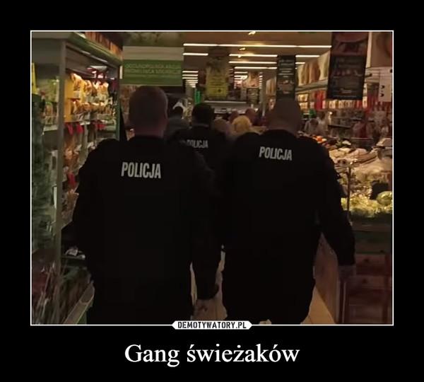 Gang świeżaków –