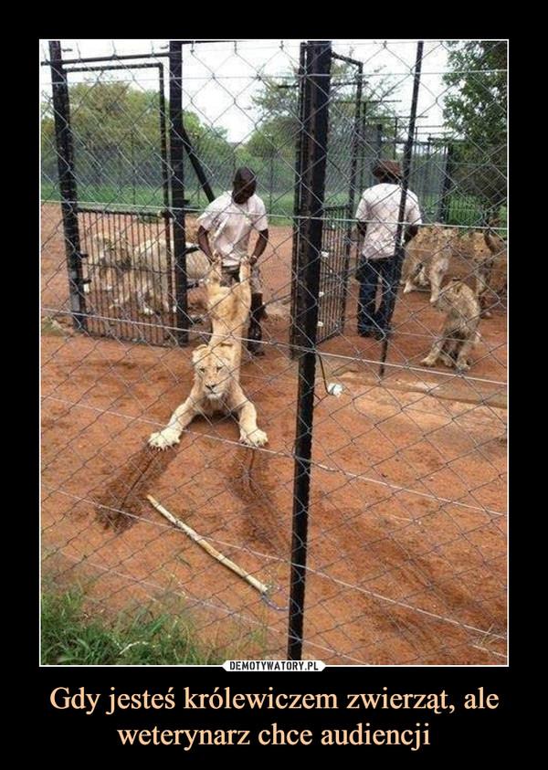 Gdy jesteś królewiczem zwierząt, ale weterynarz chce audiencji –