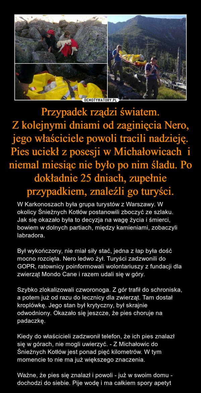 Przypadek rządzi światem.Z kolejnymi dniami od zaginięcia Nero, jego właściciele powoli tracili nadzieję. Pies uciekł z posesji w Michałowicach  i niemal miesiąc nie było po nim śladu. Po dokładnie 25 dniach, zupełnie przypadkiem, znaleźli go turyści. – W Karkonoszach była grupa turystów z Warszawy. W okolicy Śnieżnych Kotłów postanowili zboczyć ze szlaku. Jak się okazało była to decyzja na wagę życia i śmierci, bowiem w dolnych partiach, między kamieniami, zobaczyli labradora. Był wykończony, nie miał siły stać, jedna z łap była dość mocno rozcięta. Nero ledwo żył. Turyści zadzwonili do GOPR, ratownicy poinformowali wolontariuszy z fundacji dla zwierząt Mondo Cane i razem udali się w góry. Szybko zlokalizowali czworonoga. Z gór trafił do schroniska, a potem już od razu do lecznicy dla zwierząt. Tam dostał kroplówkę. Jego stan był krytyczny, był skrajnie odwodniony. Okazało się jeszcze, że pies choruje na padaczkę. Kiedy do właścicieli zadzwonił telefon, że ich pies znalazł się w górach, nie mogli uwierzyć. - Z Michałowic do Śnieżnych Kotłów jest ponad pięć kilometrów. W tym momencie to nie ma już większego znaczenia. Ważne, że pies się znalazł i powoli - już w swoim domu - dochodzi do siebie. Pije wodę i ma całkiem spory apetyt Szukali labradora 25 dni, leżał wycieńczony w górach.Na noszach znieśli go goprowcy20 października 2017,10:24