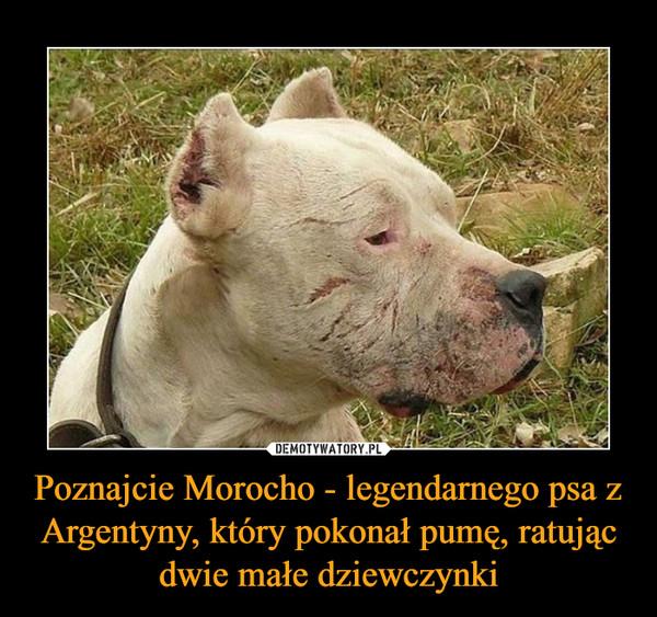 Poznajcie Morocho - legendarnego psa z Argentyny, który pokonał pumę, ratując dwie małe dziewczynki –