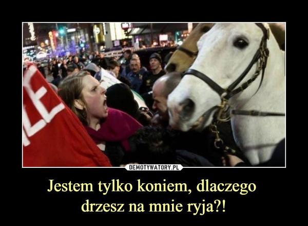 Jestem tylko koniem, dlaczego drzesz na mnie ryja?! –